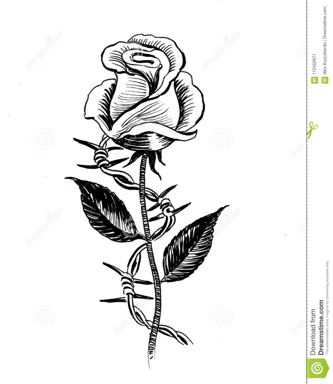 Barbed Wire Rose Tattoo: Rose And Barbed Wire Stock Illustration. Illustration Of