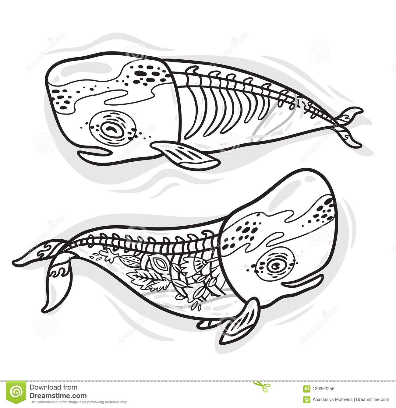 Floral Anatomy Whales In Outline Vector Illustration Stock Vector