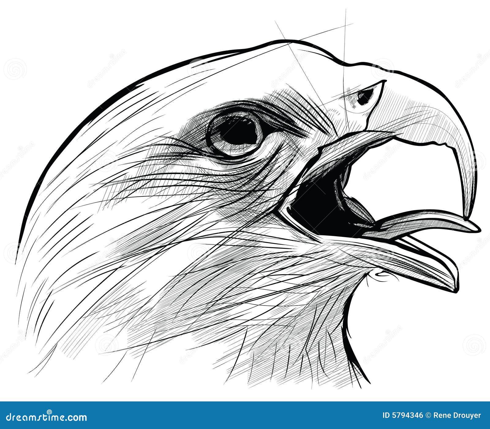 ink drawing of langkawi eagle royalty free stock image