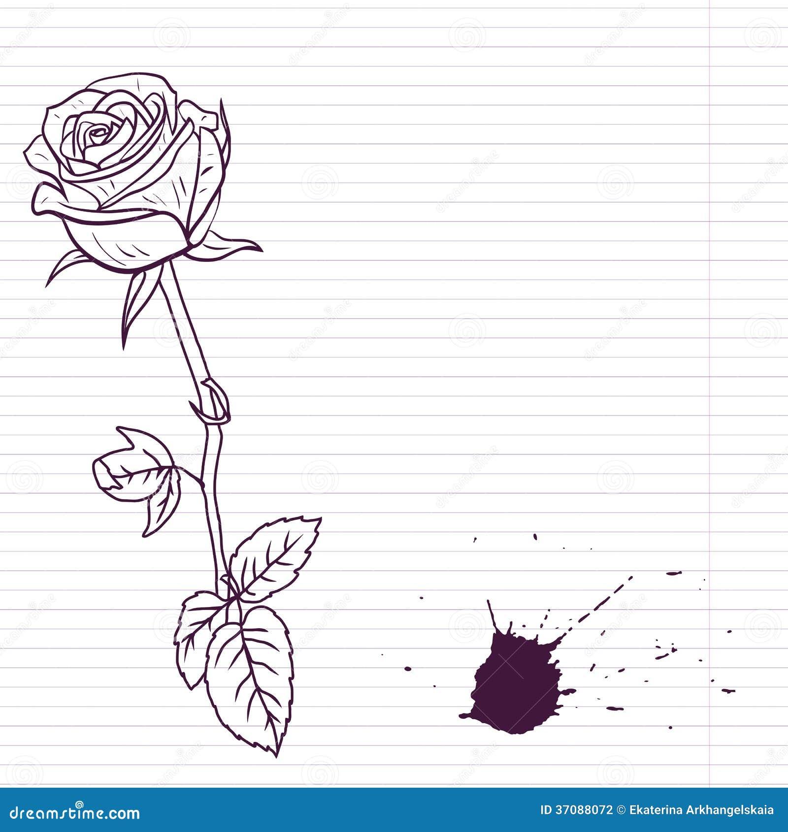 ink drawing rose stock vector illustration of biro leaf 37088072
