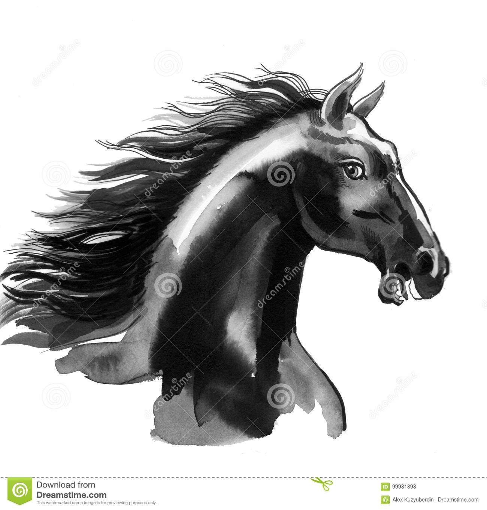Black Beauty Stock Illustration Illustration Of Mammal 99981898