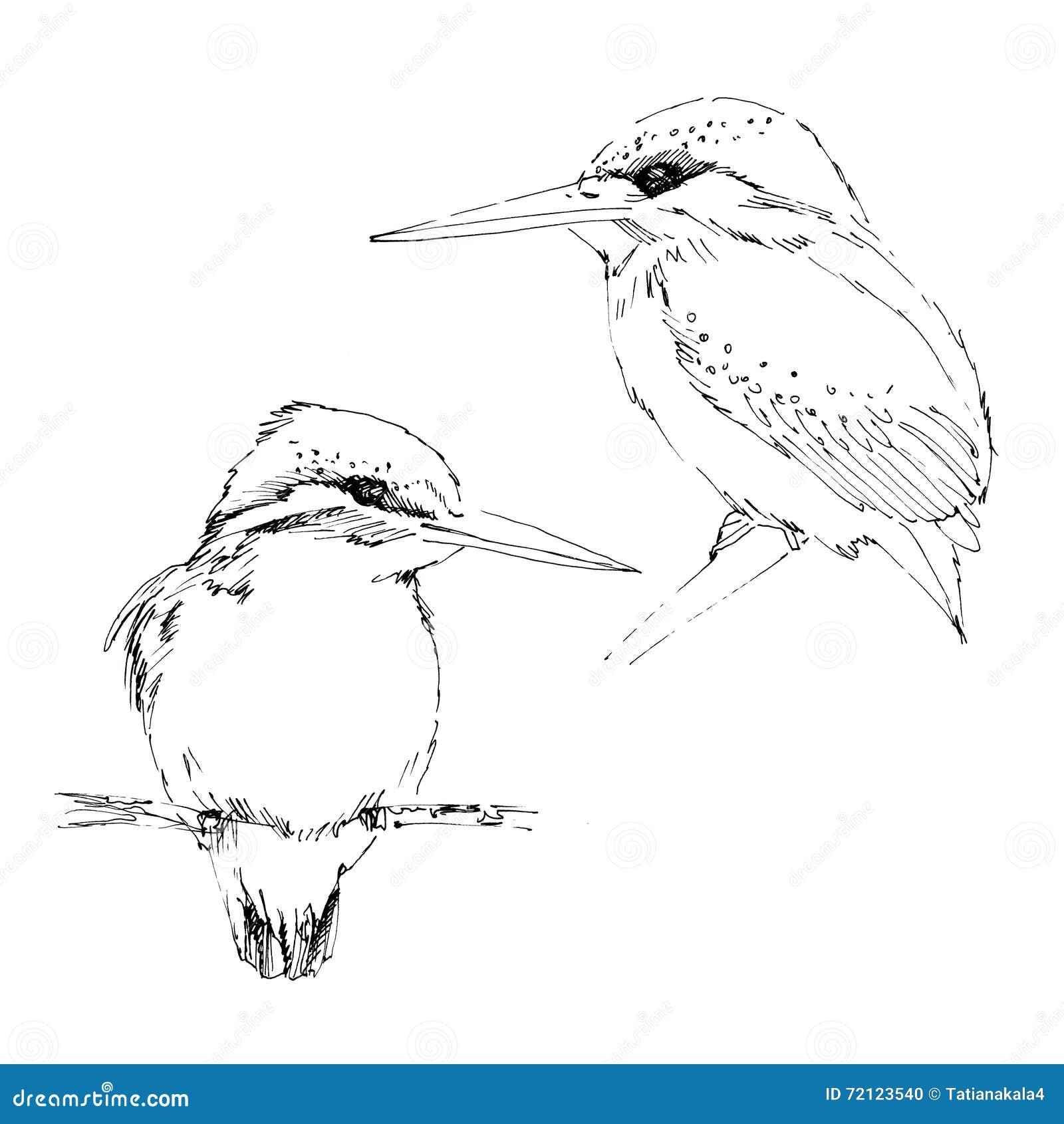 Ink Sketch Of Small Bird Kingfisher Stock Illustration ...