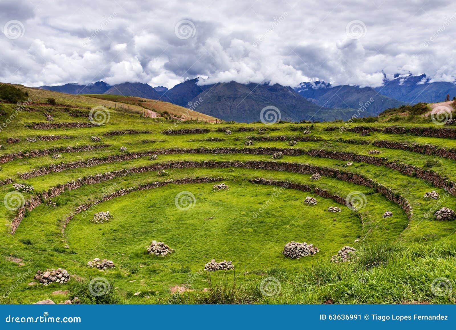 Inka kurenda tarasuje w murenie, w Świętej dolinie, Peru