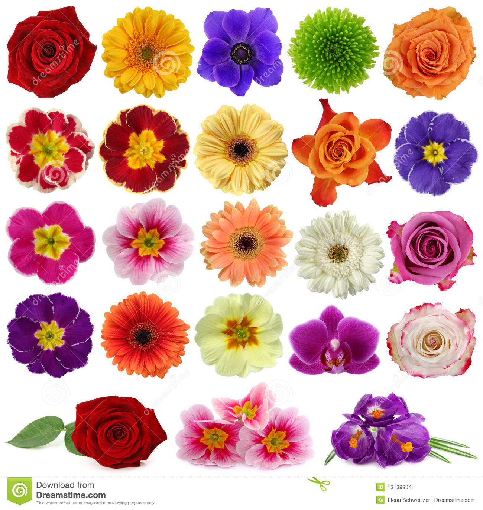 Inkasowy kwiat