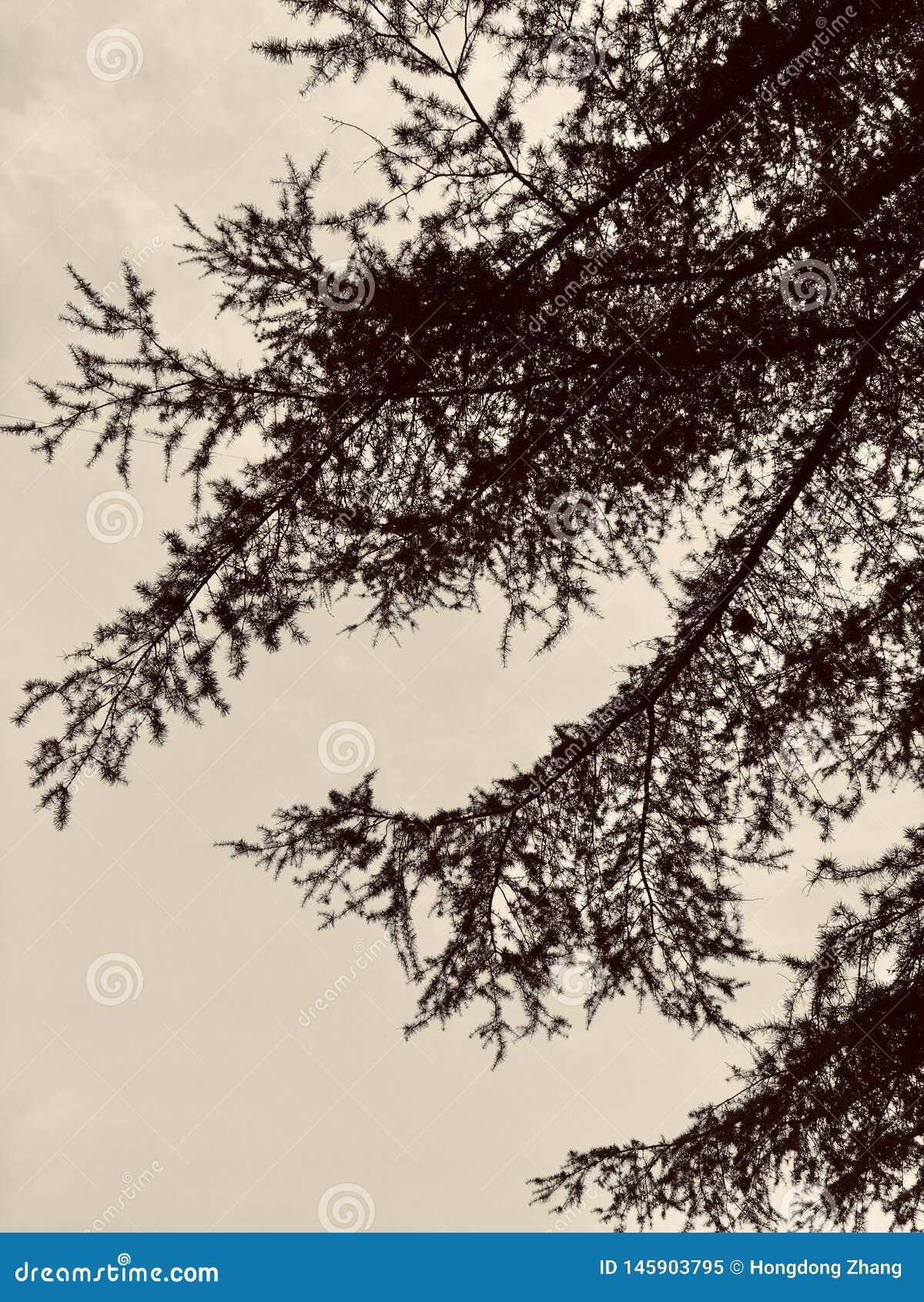 Inkt het schilderen door cederbladeren