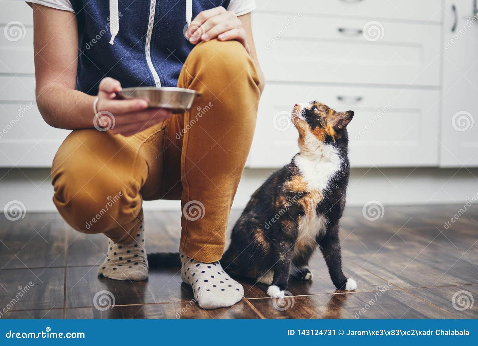 Inländisches Leben mit Katze