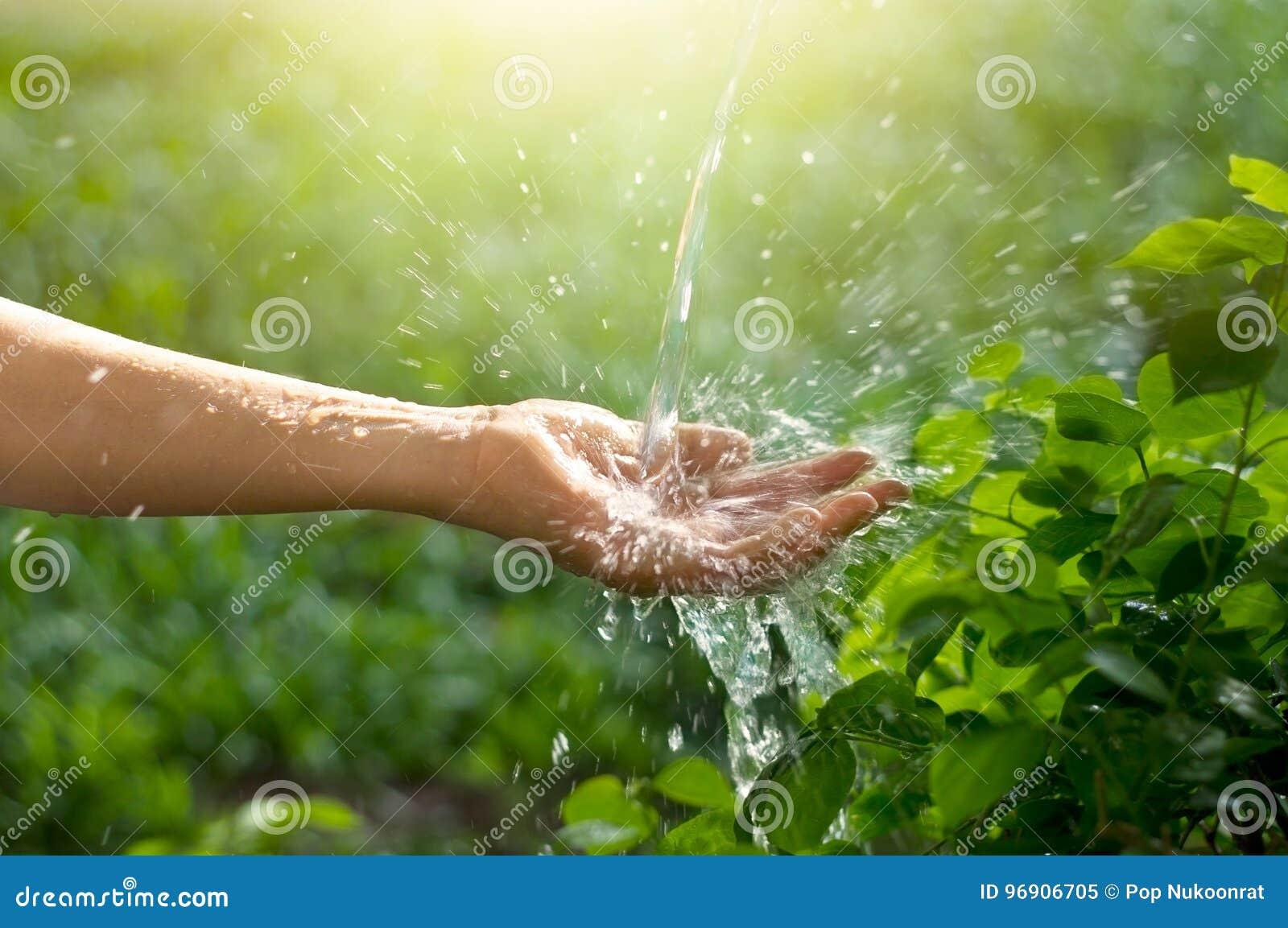 Innaffi il versamento in mano della donna sul fondo verde della natura