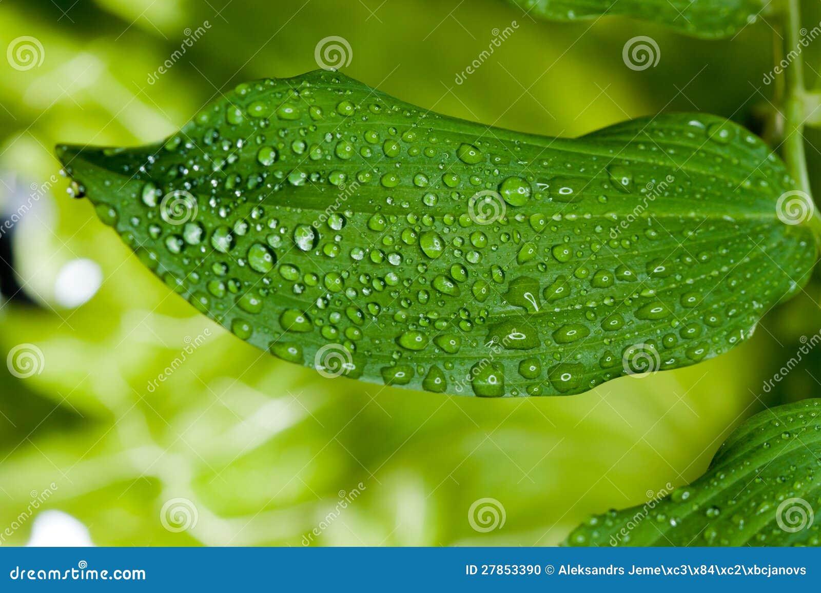 Innaffi le gocce sulla pianta