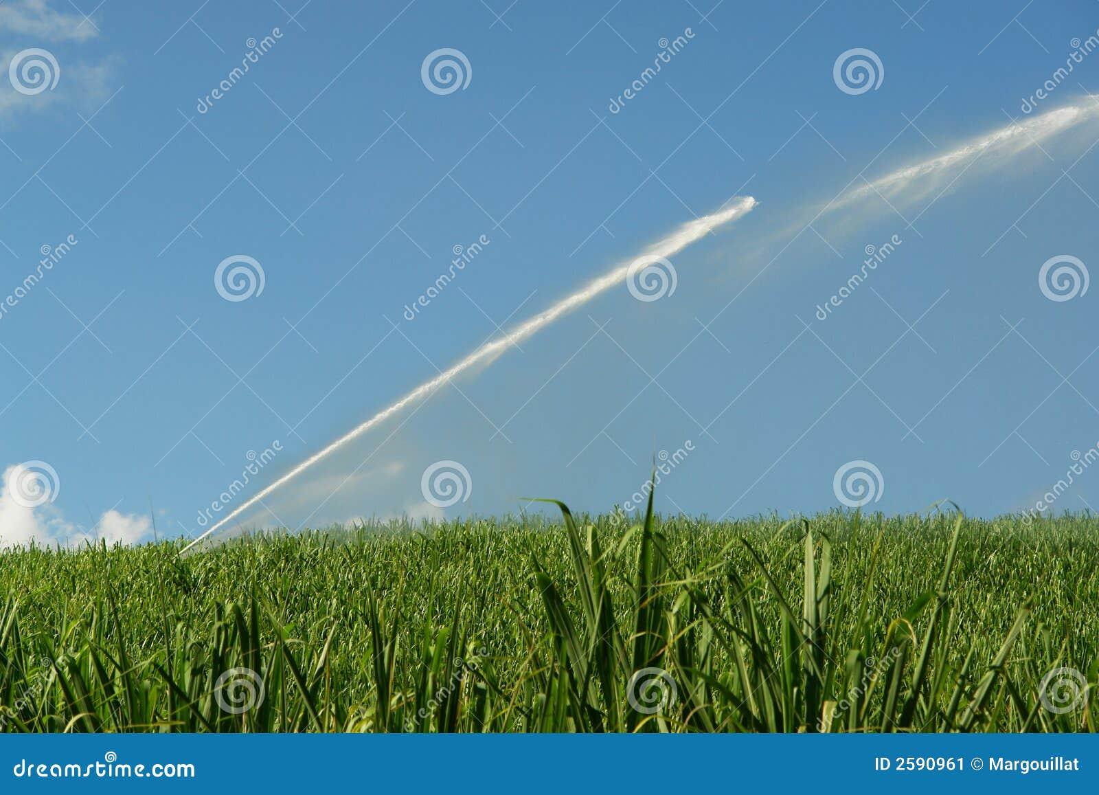 Innaffiando su un campo di zucchero