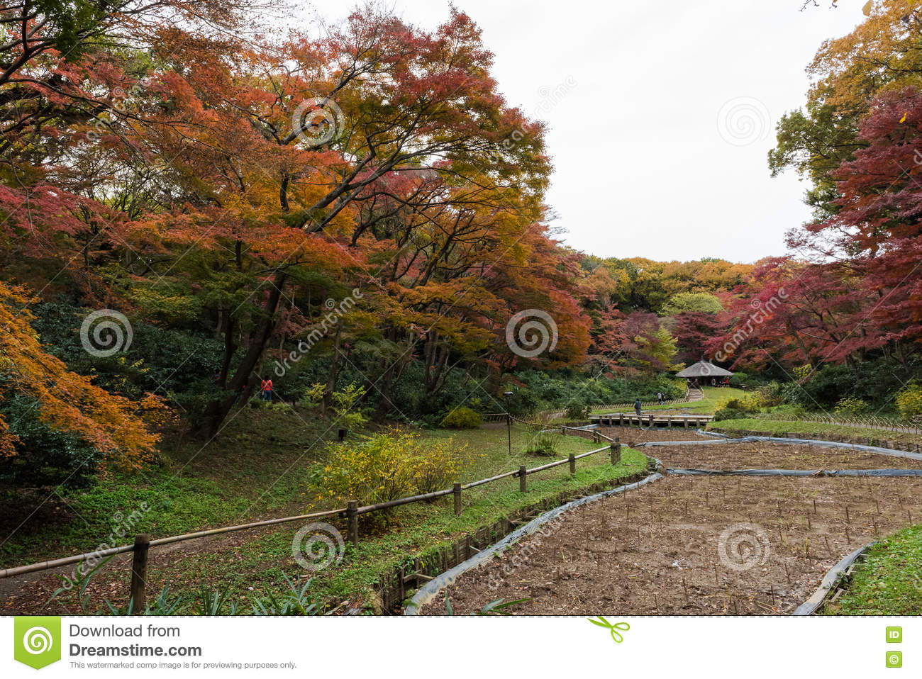 Inner Gardens At Meiji Jingu Located In Shibuya, Tokyo, Japan Stock ...