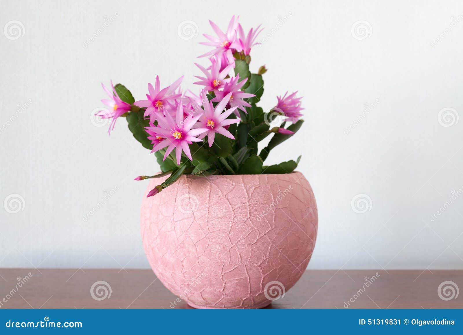 Inomhus Schlumberger Blomma I Inre Fotografering för Bildbyråer ... : blommor inomhus : Inredning