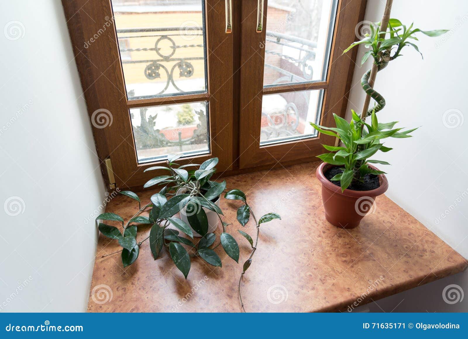 Inomhus Växter I Krukor På Fönsterbräda Arkivfoto - Bild: 71635171