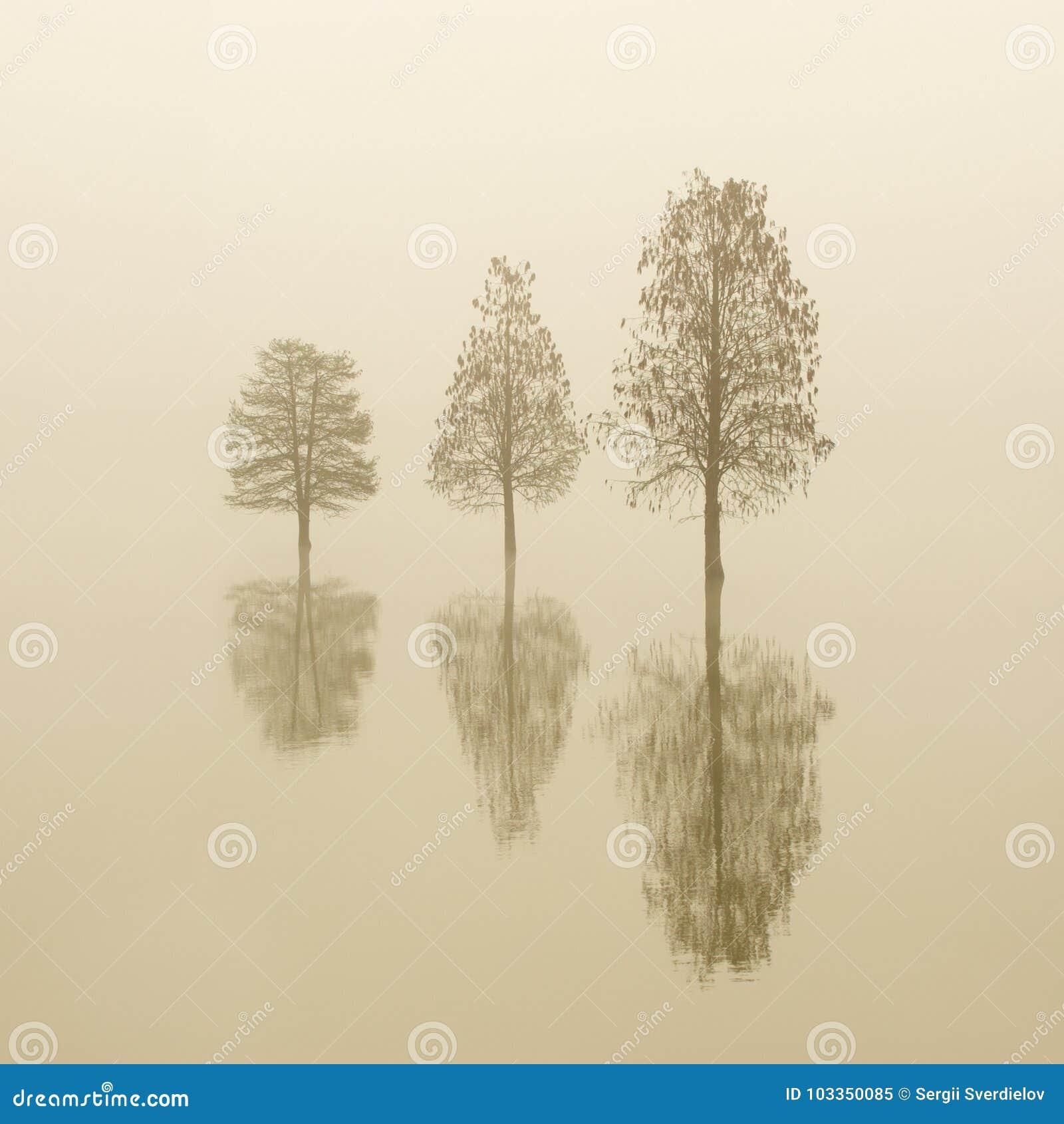 Inondé trois arbres isolés dans un brouillard au lever de soleil L eau lisse