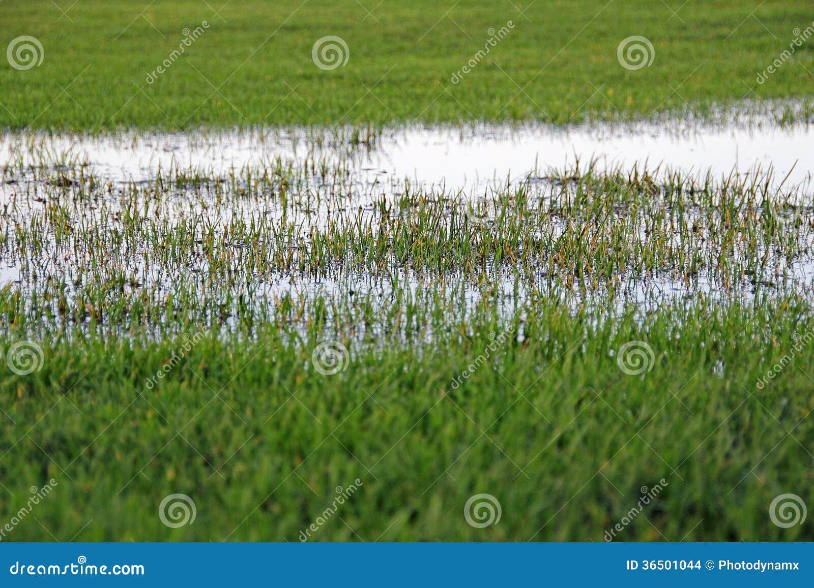 Inondation de marécages
