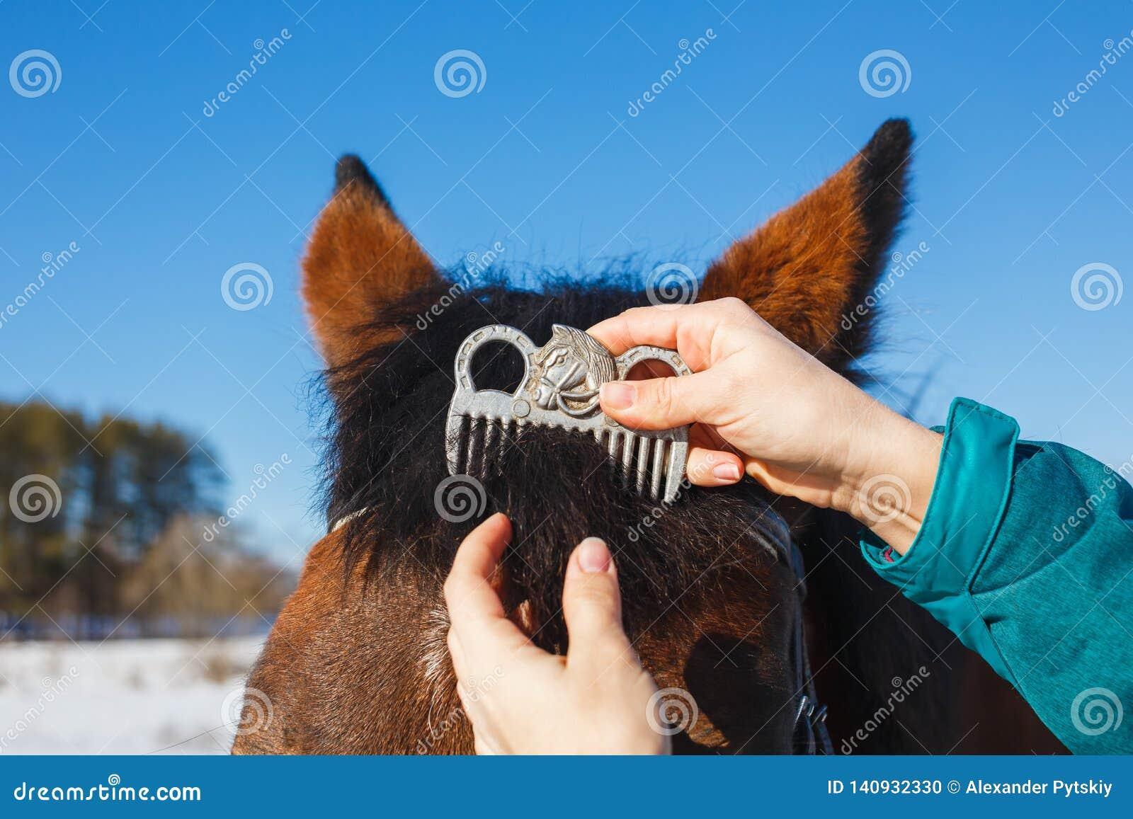 Inquietação com um cavalo Penteando o pente especial da juba na cabeça de cavalo