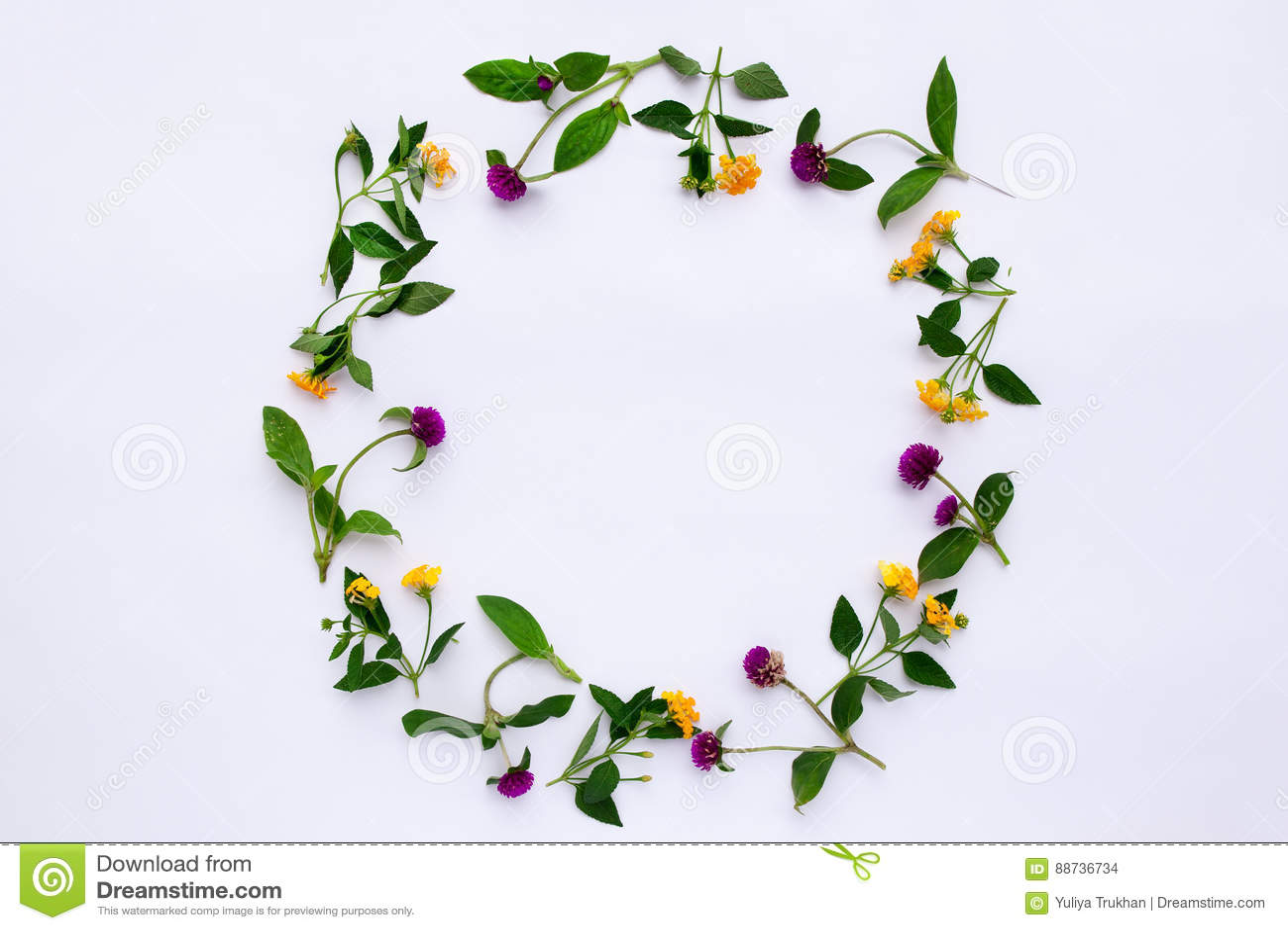 Inrama den färgrika ljusa modellen av ängörter och blommor på vit bakgrund Lekmanna- lägenhet, bästa sikt