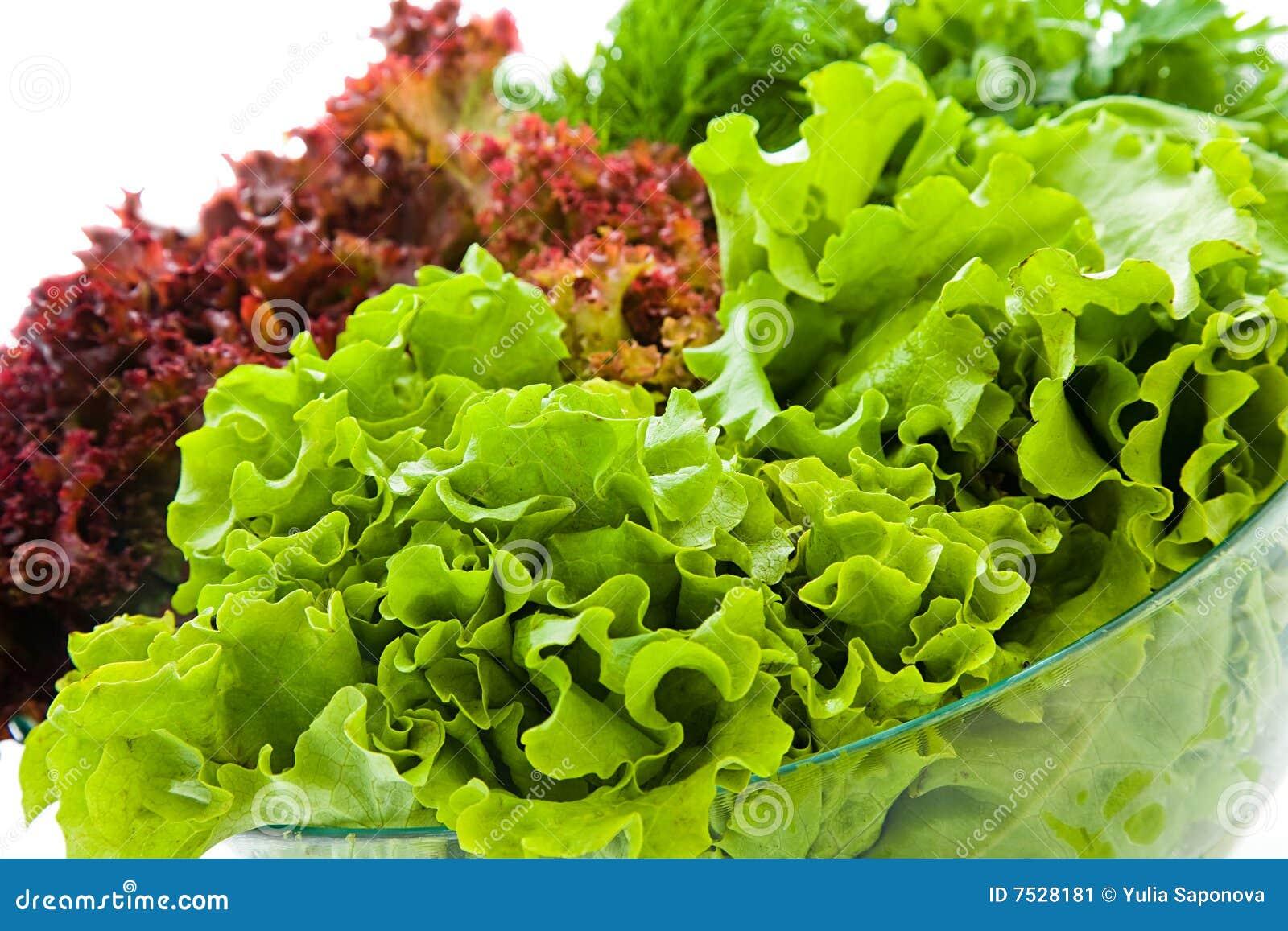 Insalate fresche