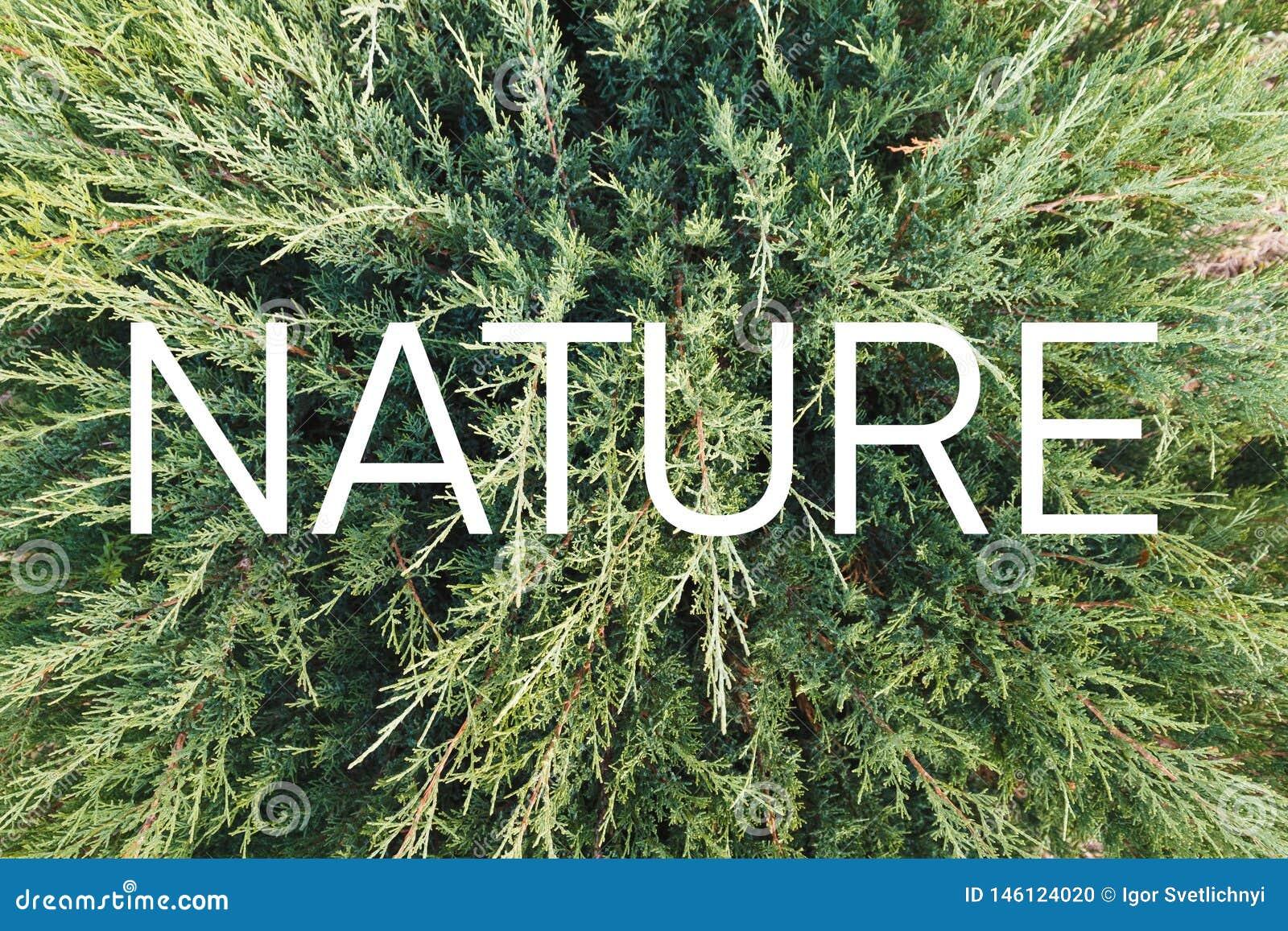 Inscripción 'naturaleza 'en el fondo de una planta verde viva
