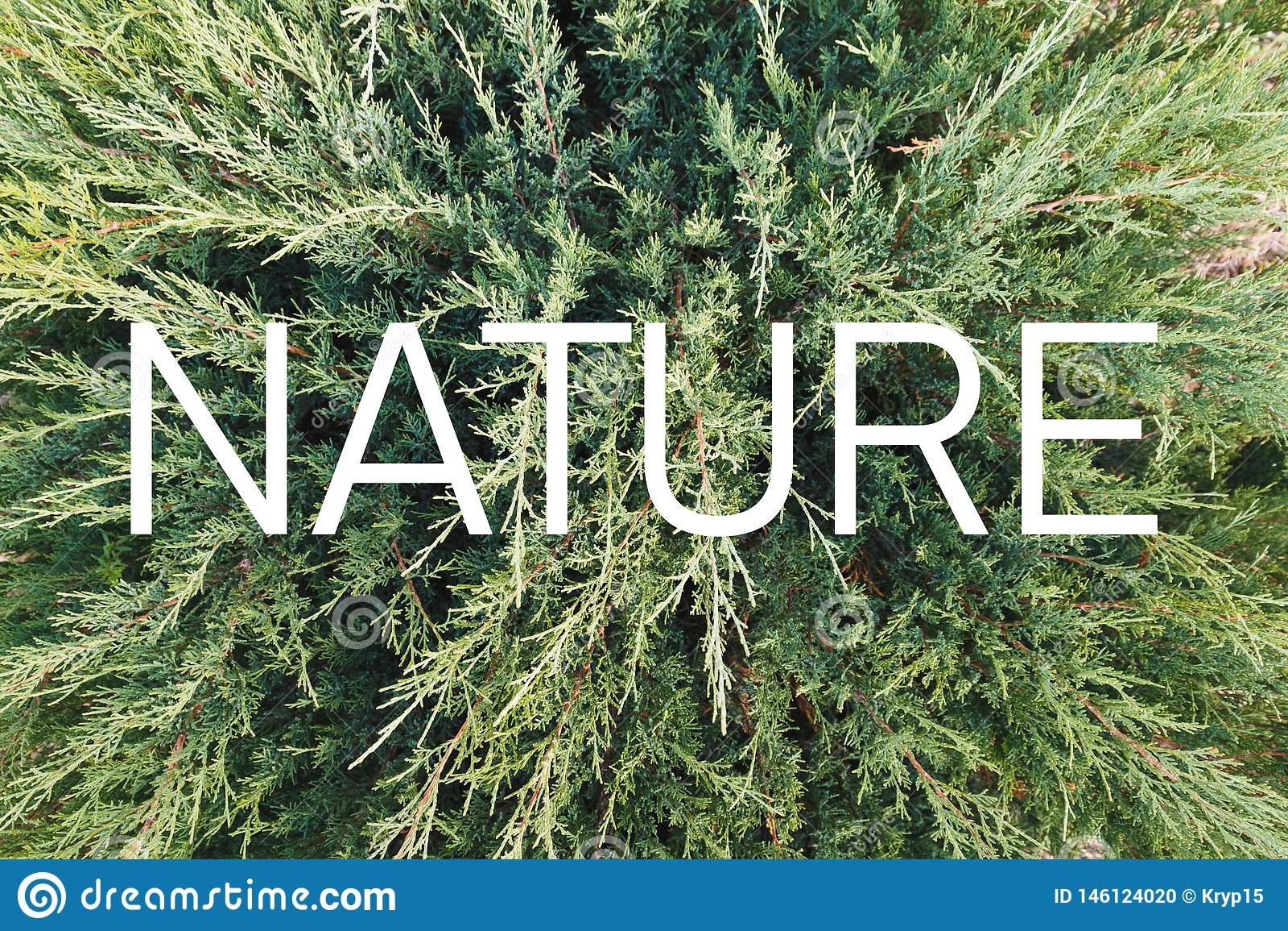 """Inscription """"nature """"sur le fond d une plante verte vivante"""