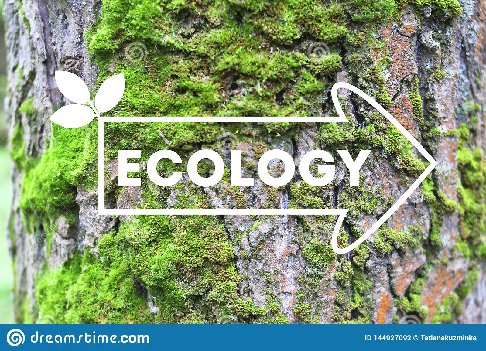 Inscription Ecology on the arrow tree bark background The concept of ecology Natural banner