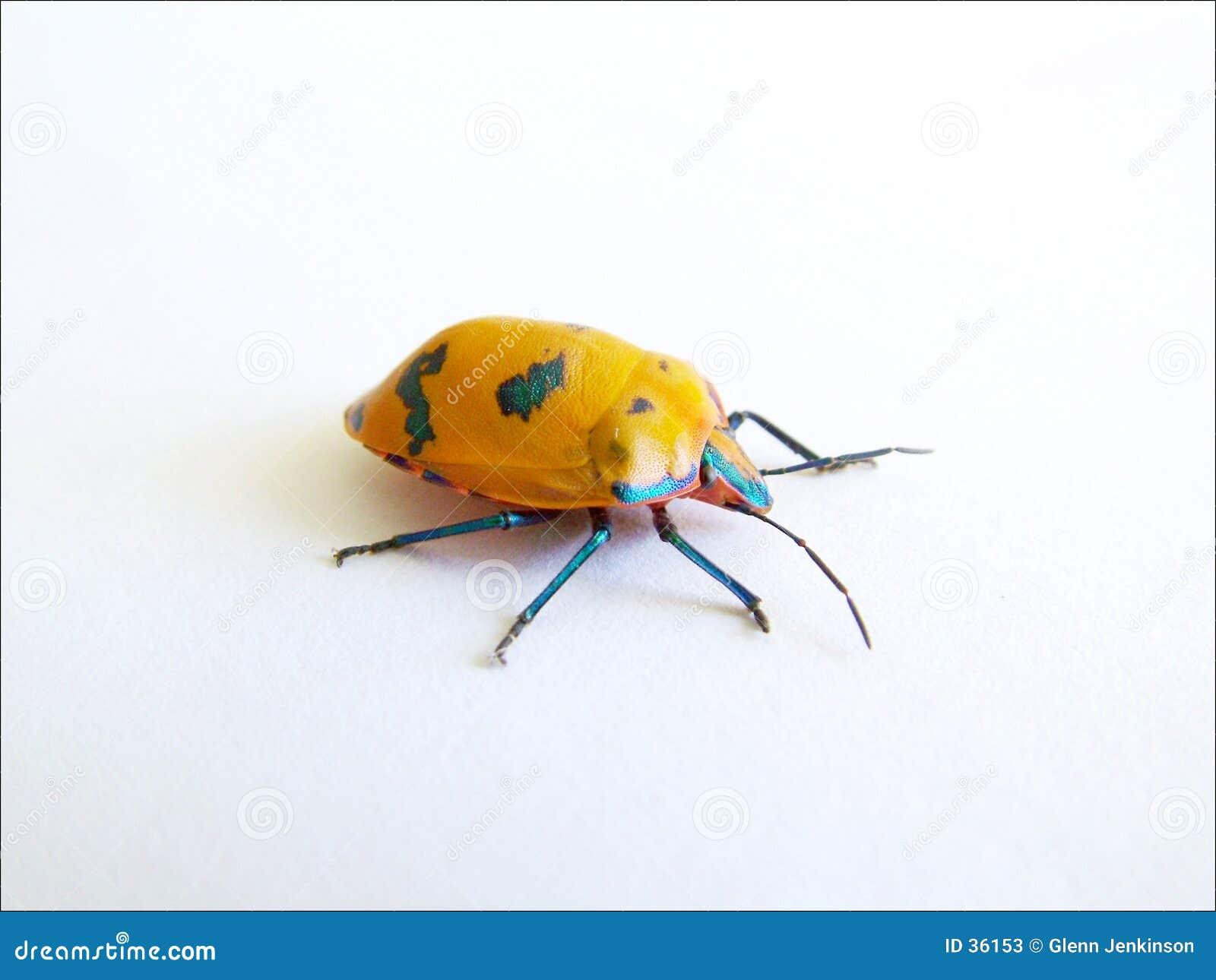 Insect 2 van de kleur