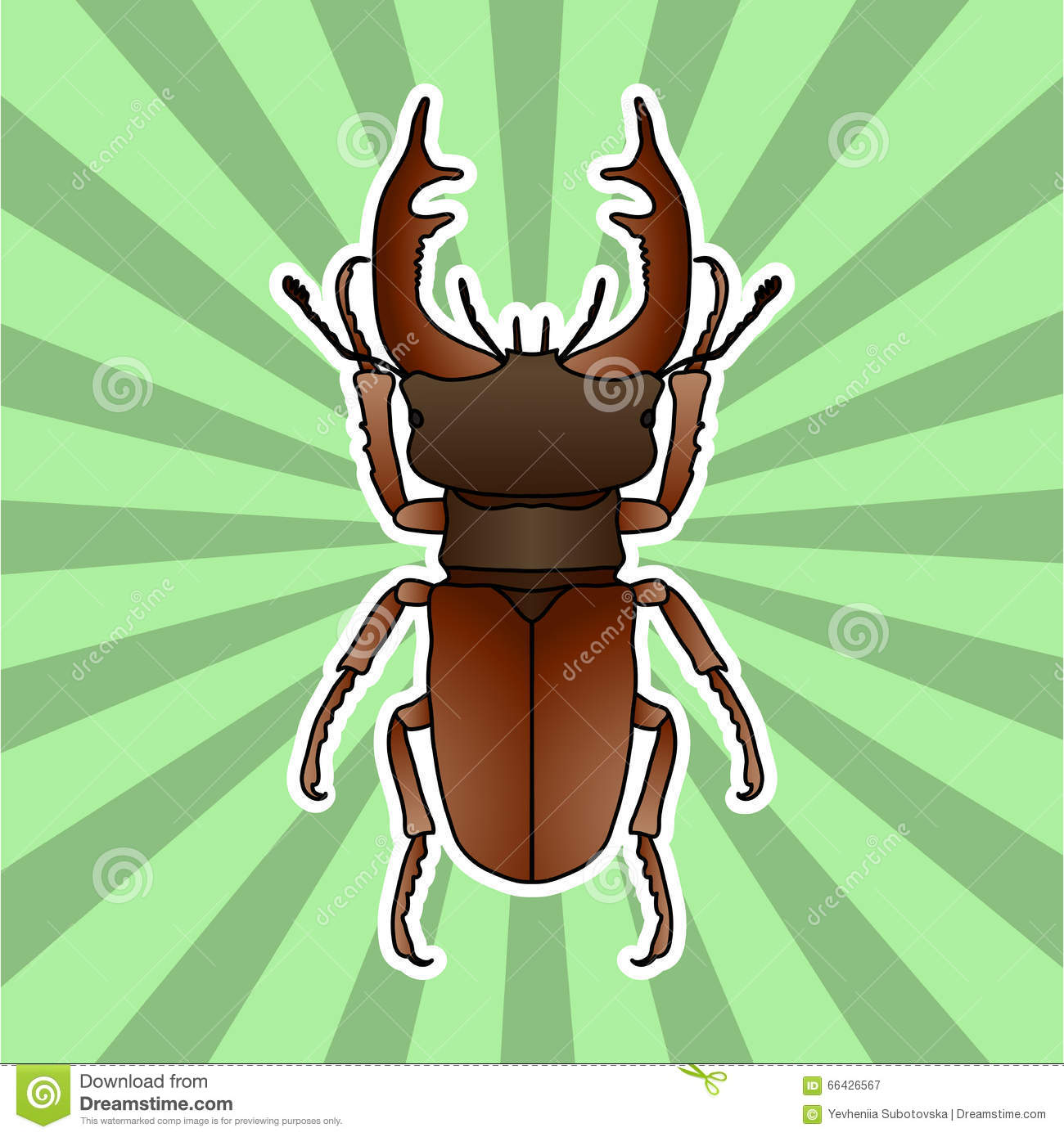 insect anatomy sticker stag beetle lucanus cervus sketch of