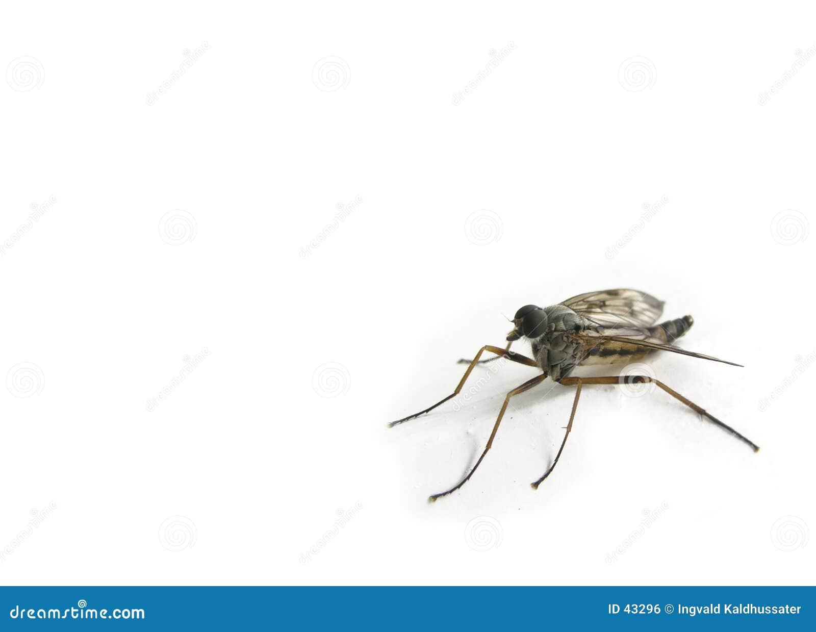 Insect in de hoek