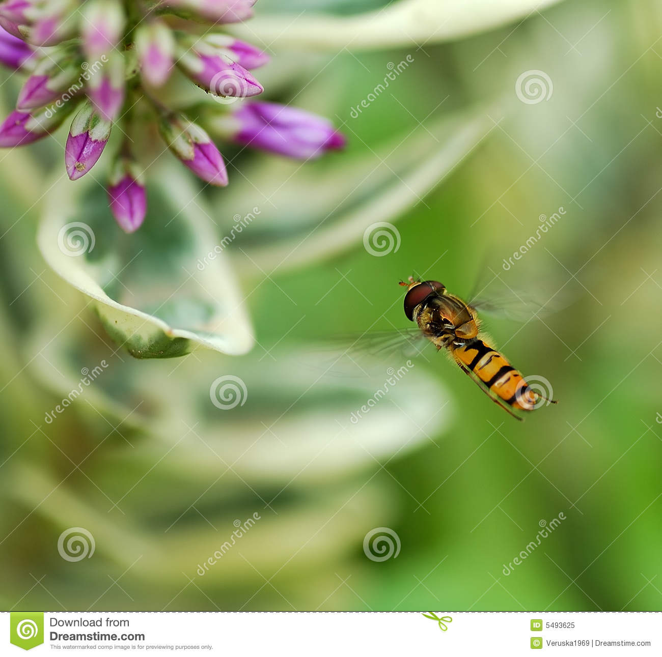 Insect flying