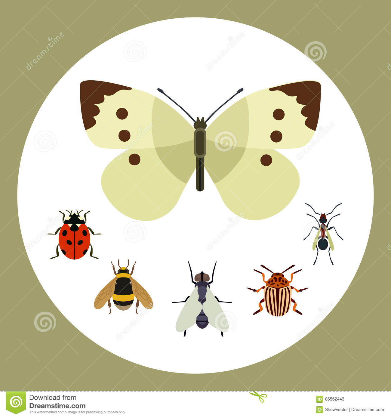 Worksheet Butterfly Beetle insect icon flat nature flying butterfly beetle ant and wildlife spider grasshopper or mosquito cockroach