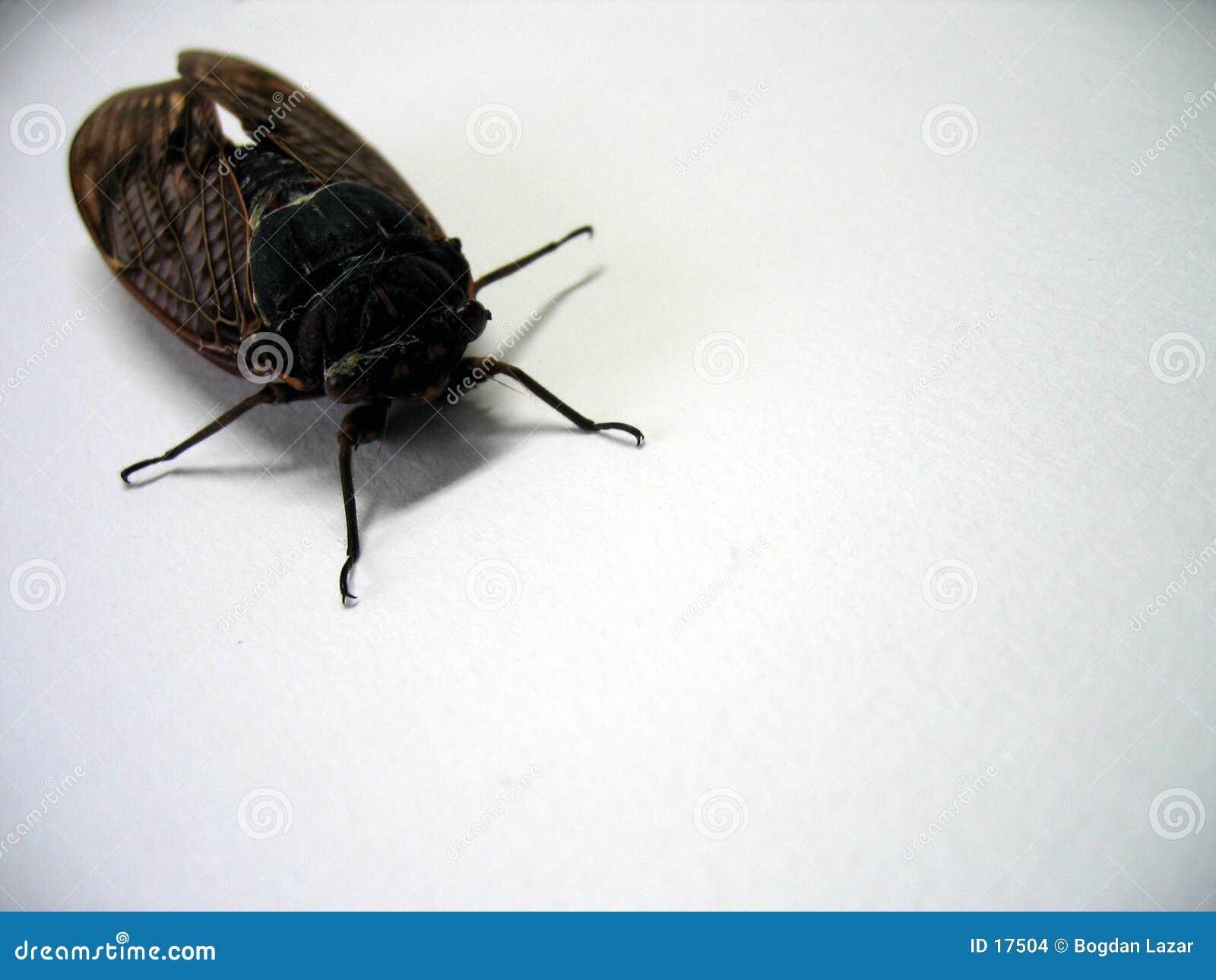 Insect - perspectiefmening