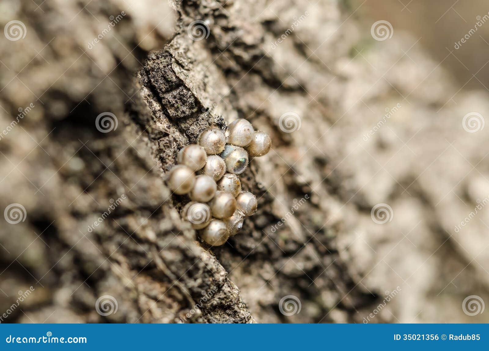 Insect Uitgebroed Ei onder Andere Unhatched Degenen