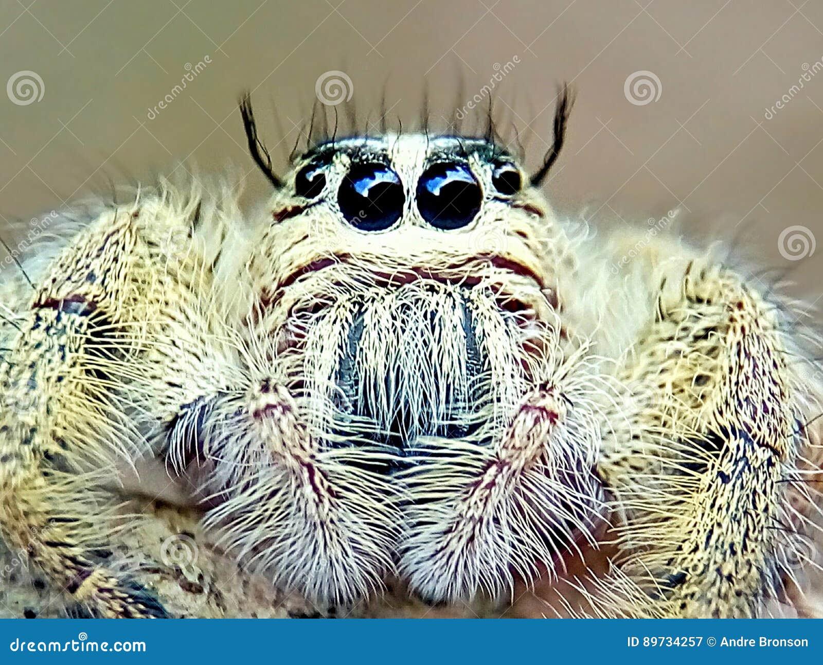 Insecte audacieux