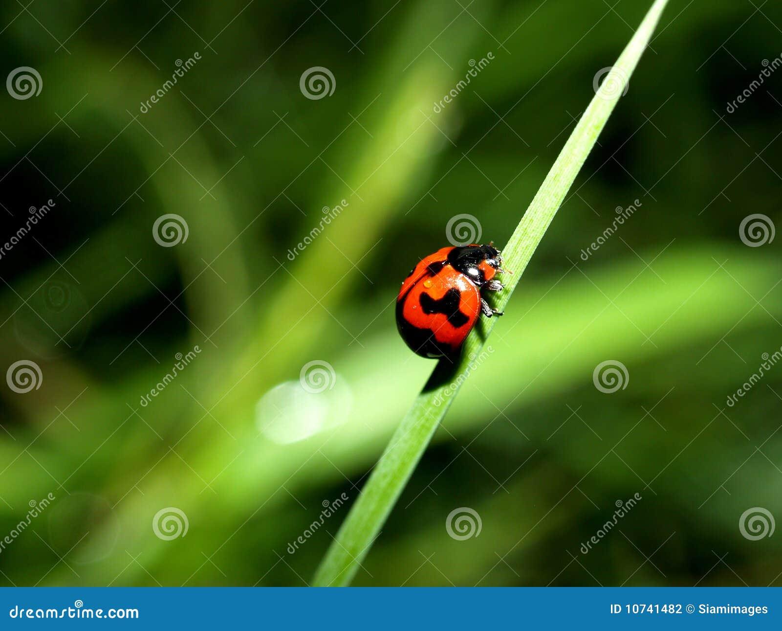Insecte d anomalie