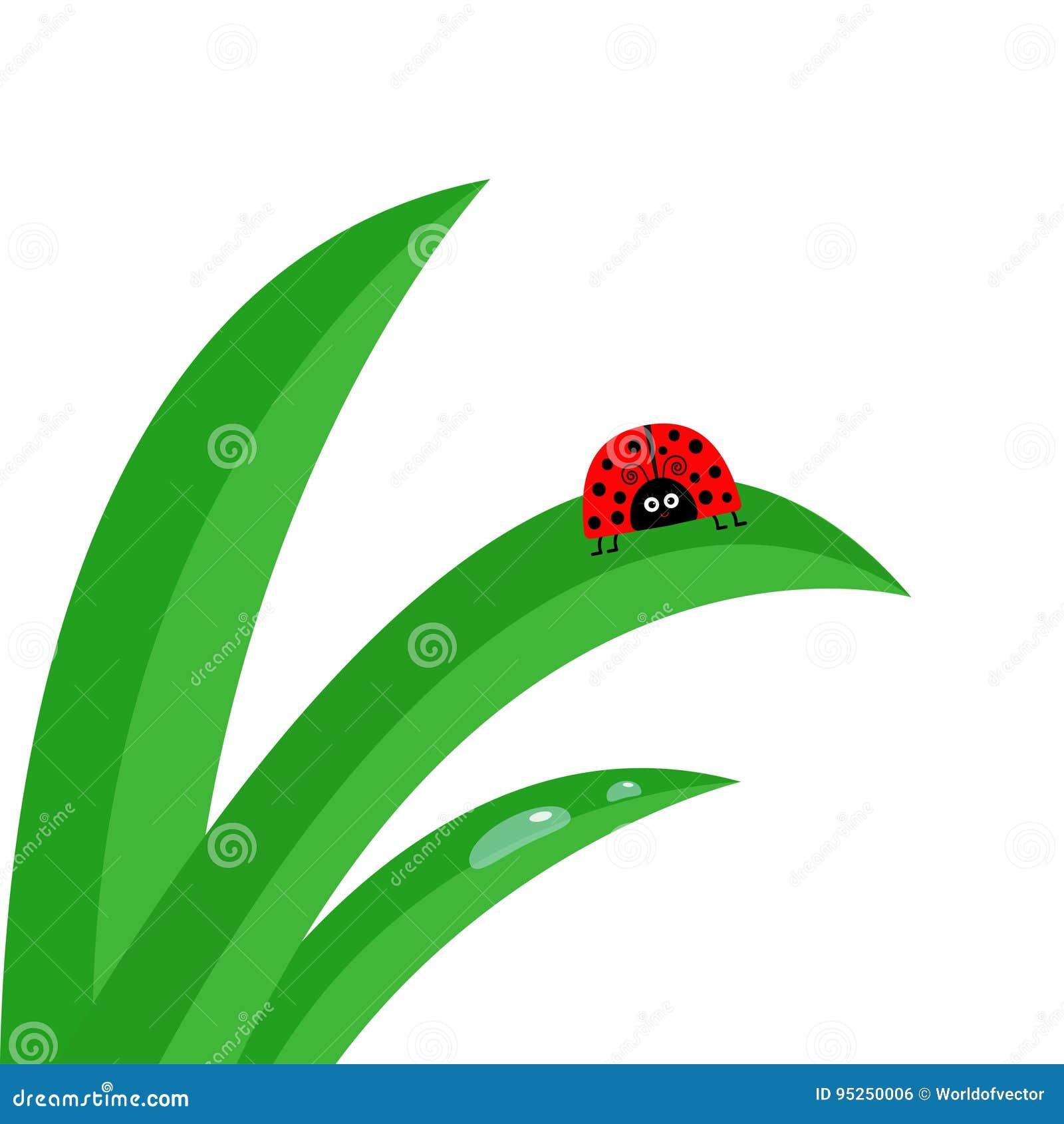 Insecte de coccinelle de coccinelle Fin fraîche de tige d herbe verte  Ensemble de baisse de l eau de matin Caractère mignon de b