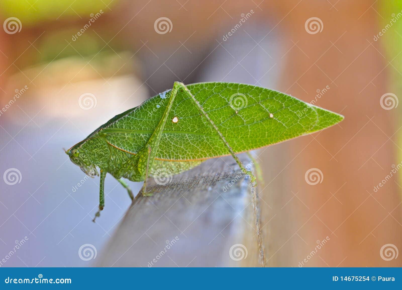 Insecte de lame