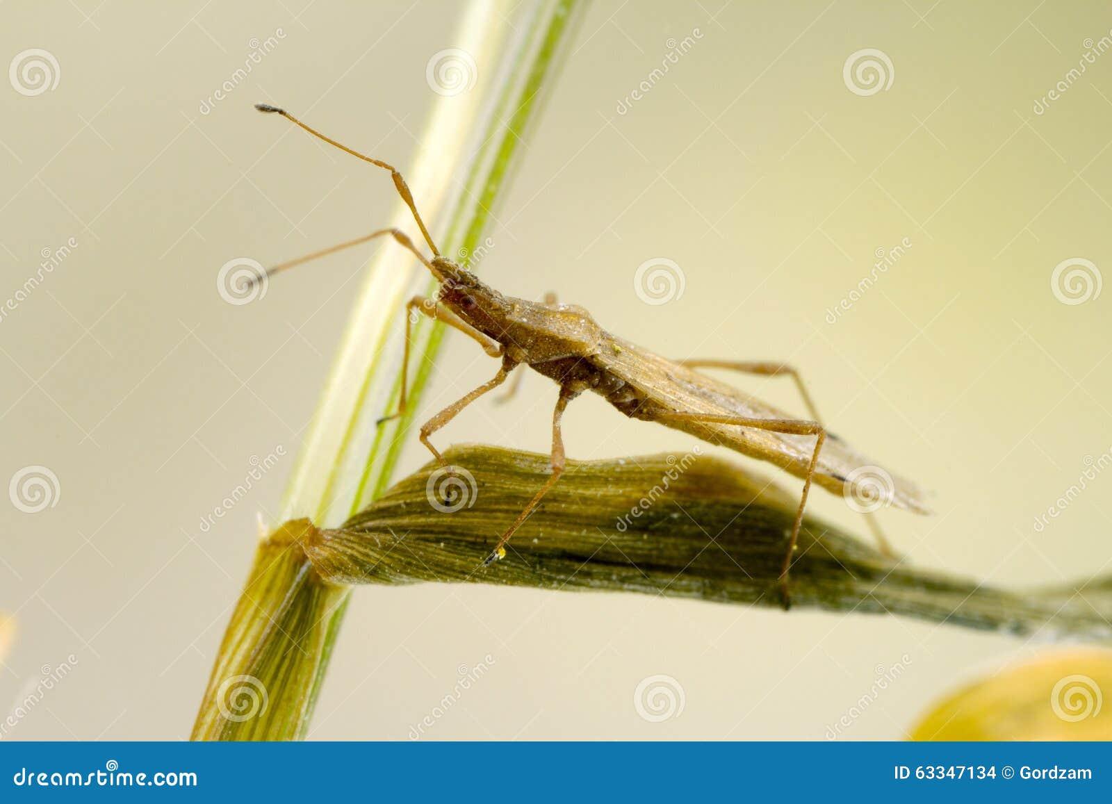insecte minuscule ovale photo stock. image du cheminée - 63347134