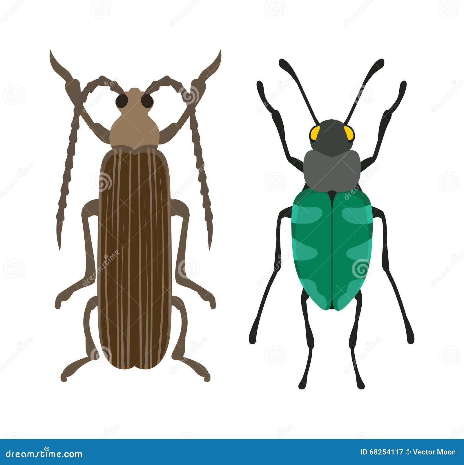 Insecte plat d insecte de scarabée dans le vecteur de style de bande dessinée