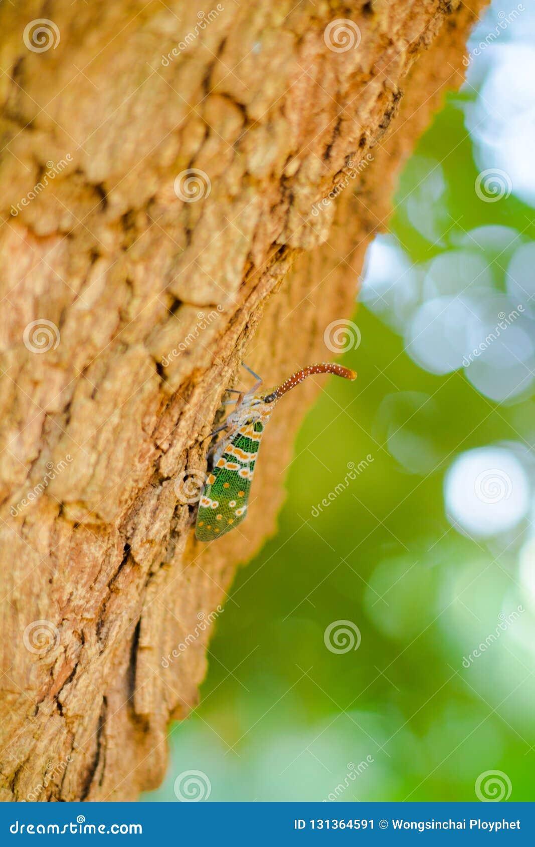 Insecte sur l arbre
