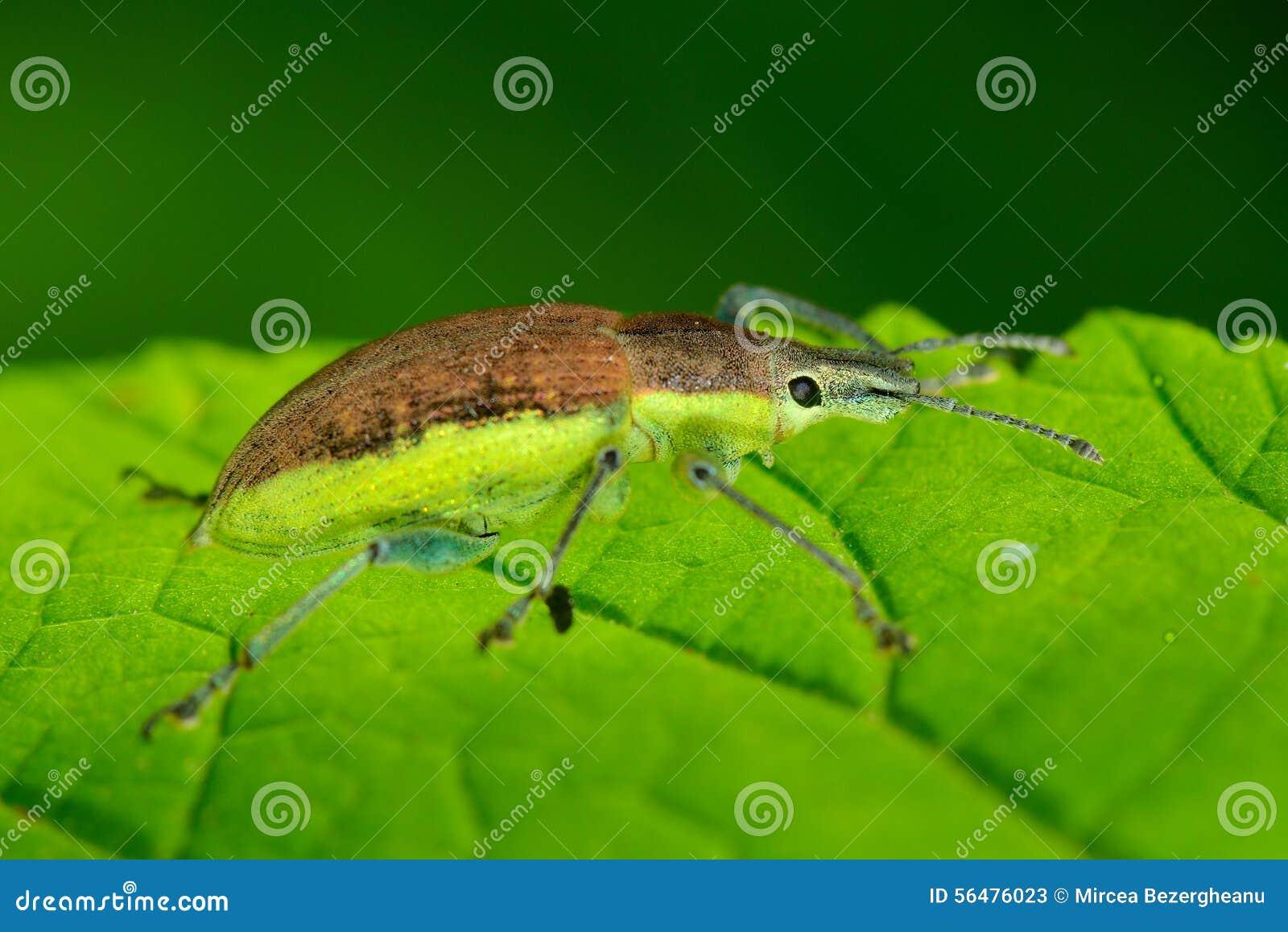 Insecte sur la feuille verte