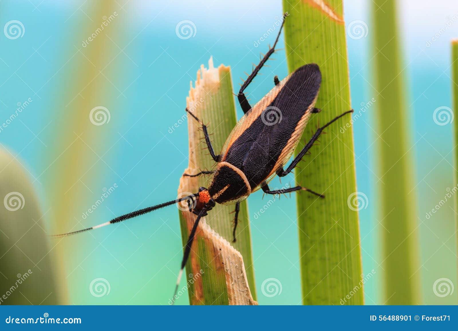 Insecte sur la lame