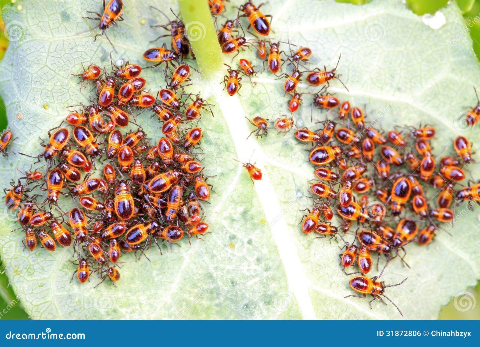 Insectes De Punaise Des Bois Dans Le Sauvage Image libre