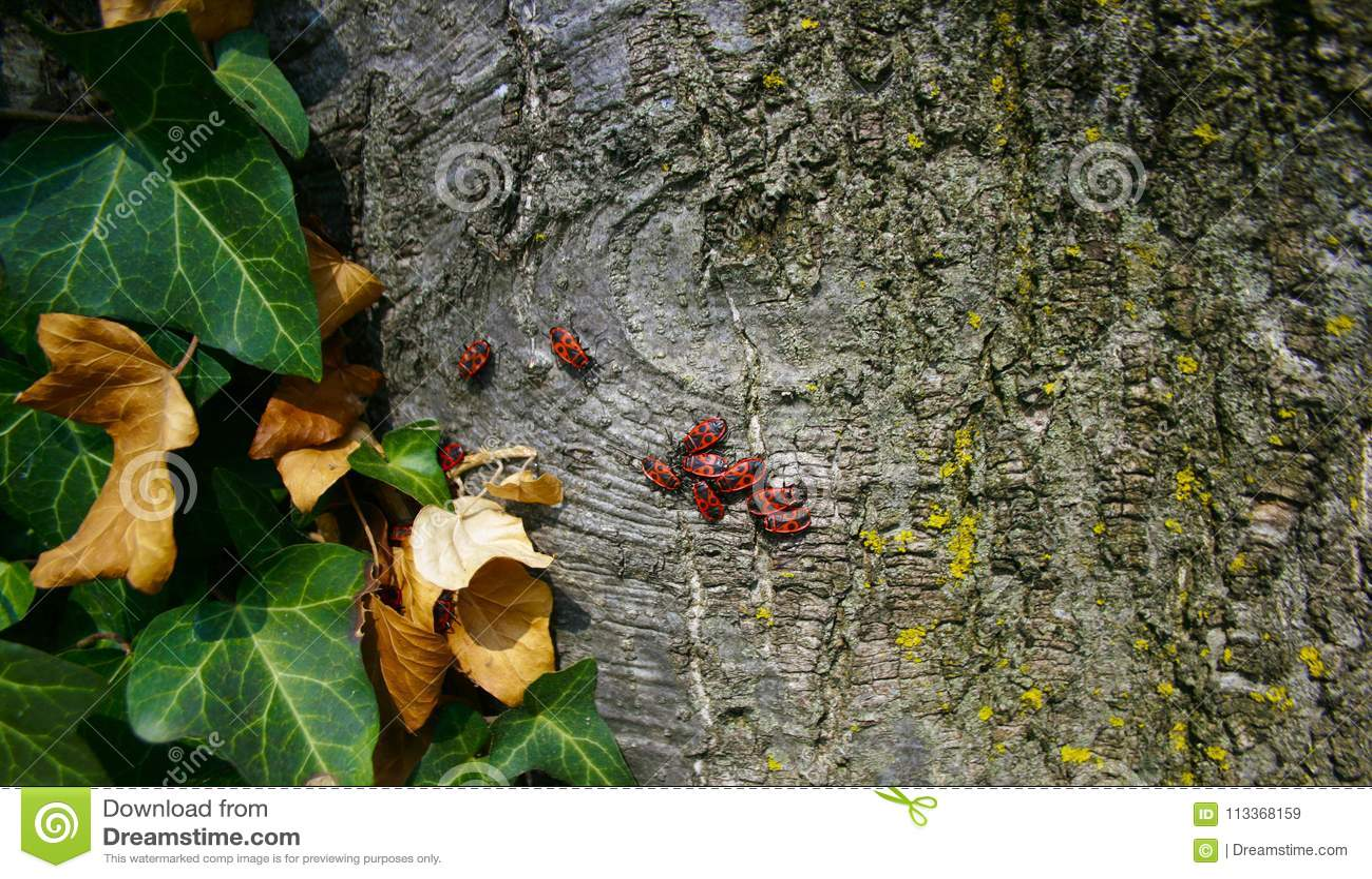 Insectes sur l arbre