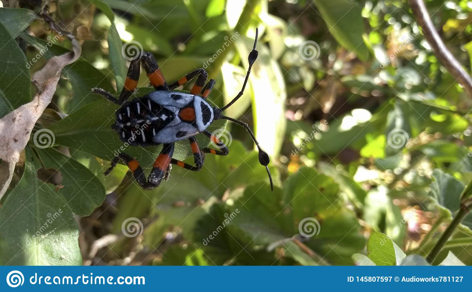 Insectes volants dans le jardin