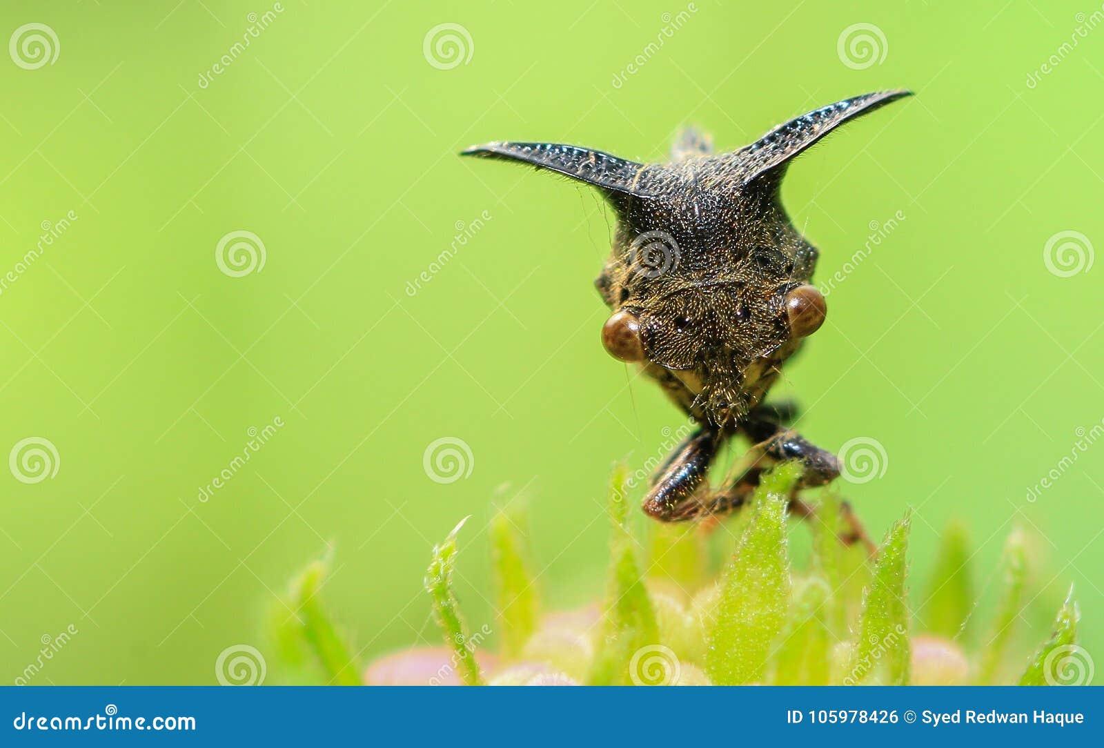Insecto Dacca de Caterpillar