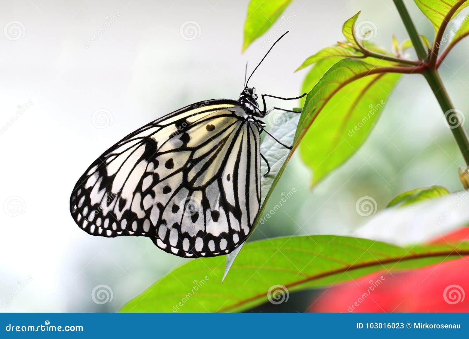 Encantador Hojas De Trabajo De Mariposa Para Segundo Grado Ornamento ...