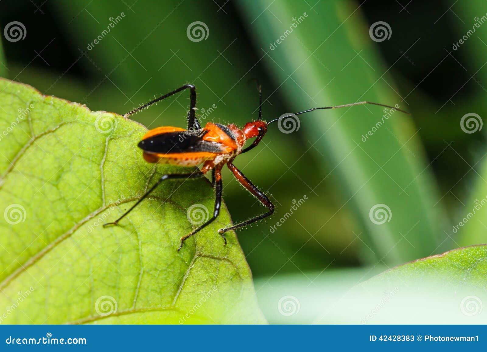 Insecto en la hierba verde