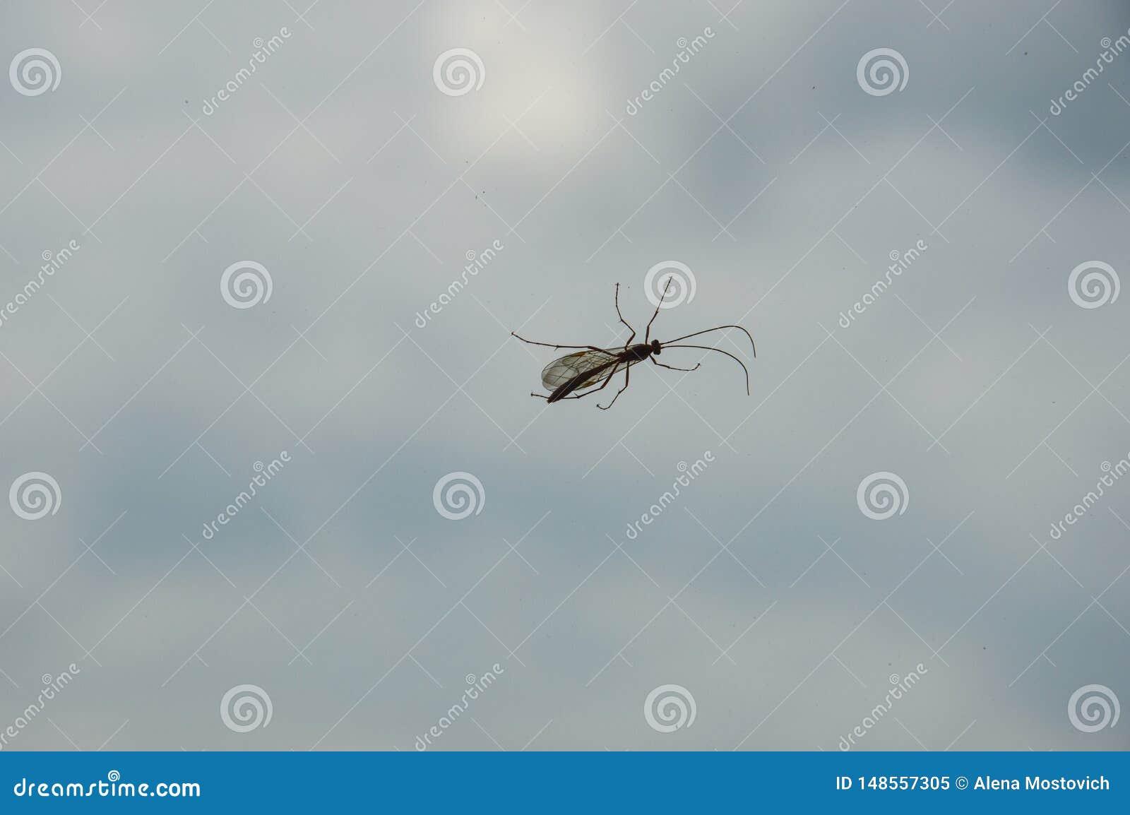 Insecto en un fondo azul