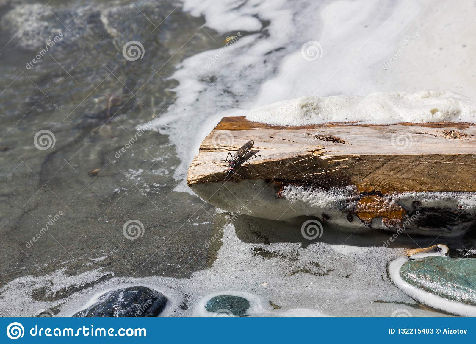 Insecto en una conexión de madera el banco de una corriente, Altai, Rusia