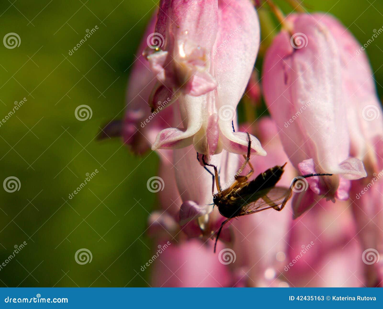 Insecto que se sienta en una flor