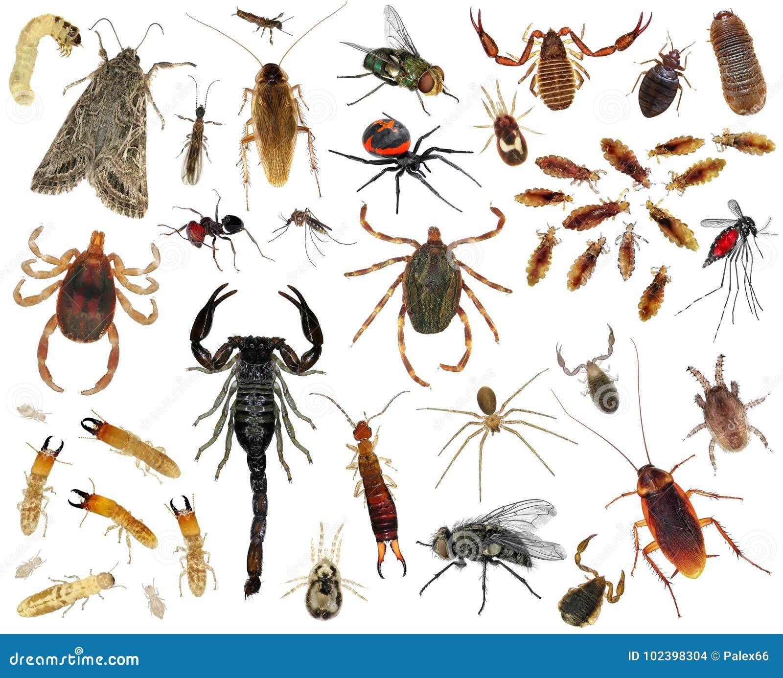insectos parasitos que son